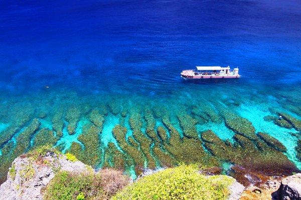 戀戀珊瑚海